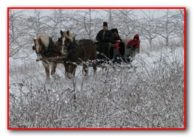 Winter Sleigh Ride